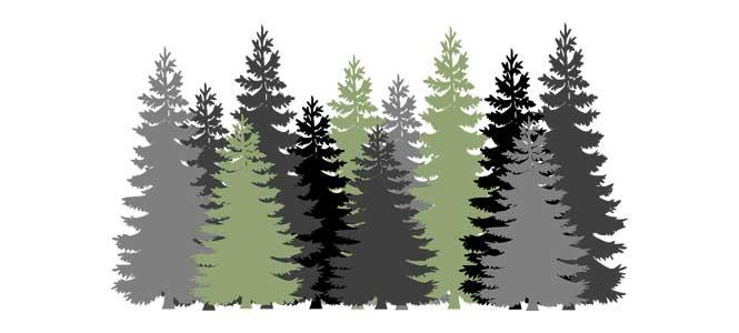 Hajný je lesa pán