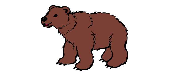 Medvědi nevědí