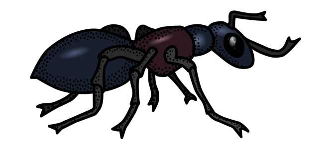 Mravenčí ukolébavka