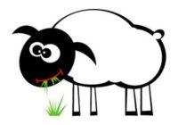 Náhled Pásla ovečky