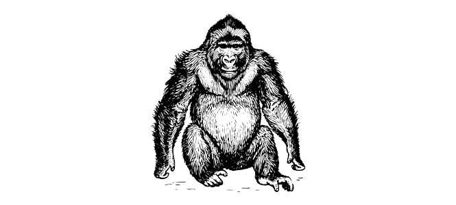 Jak se loví gorila
