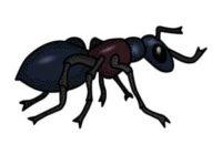 Náhled Mravenčí ukolébavka
