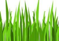 Náhled Travička zelená