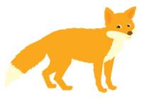 Náhled běží liška k Táboru