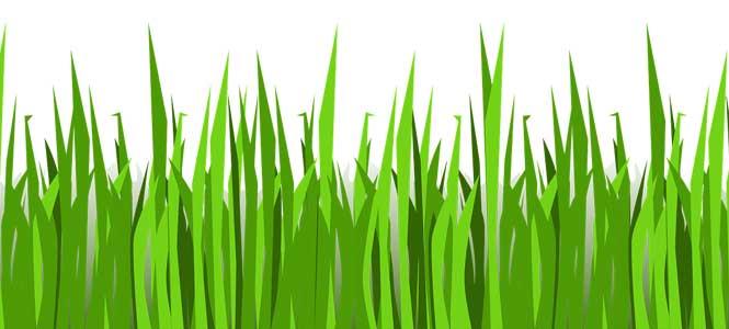 Travička zelená